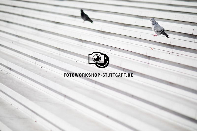 1-wasserzeichen-mitte-100-deckkraft-50gross-Fotokurs-Fotoworkshop-Fotocoach-Fotocoaching-Stuttgart