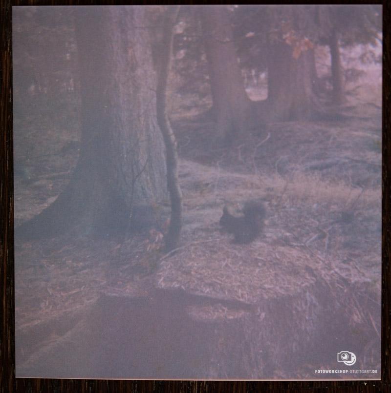 Lomografie mit Kodak Instamatic 56 - Ergebnisfoto Zwei