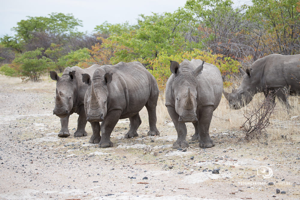 Before-Rhinos