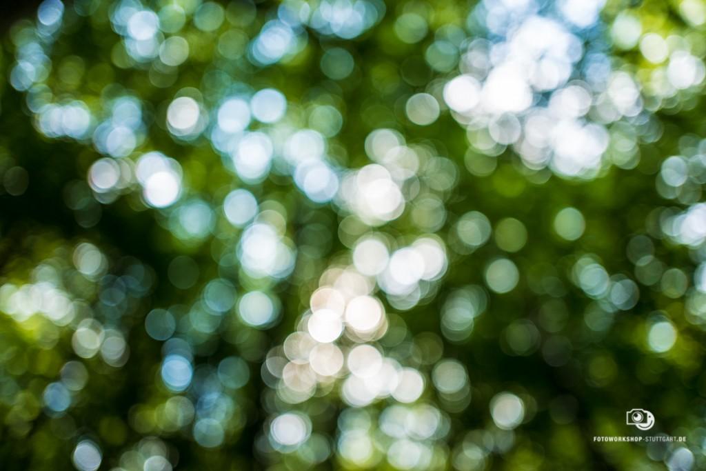 Leica Q Bokeh Test - wunderschöne kreisrunde Unschärfe!