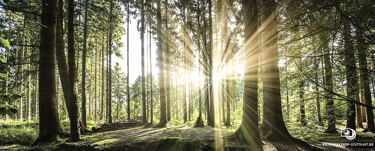 Umweltschutz ist einer unserer Hauptwerte